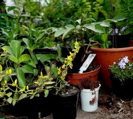 Изображение для категории Растения